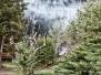 Požár lesa Holubov 17. 9. 2015